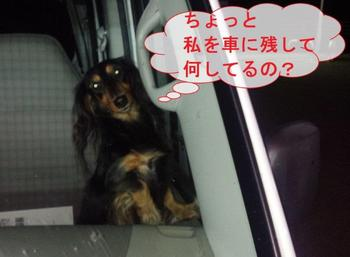 DSC_0482-1.jpg