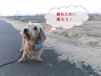 お散歩10.jpg