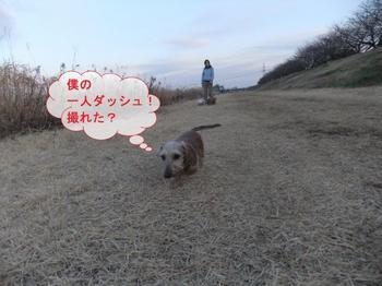 お散歩6.jpg