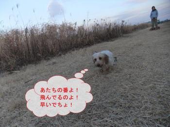 お散歩7.jpg