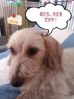 PhotoHenshu_20121223114200.jpg
