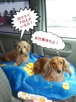 PhotoHenshu_20140318125747.jpg