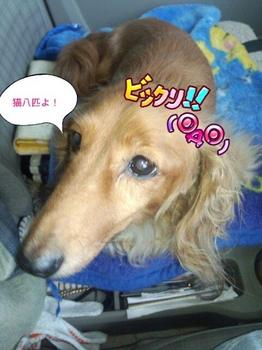 PhotoHenshu_20140629074556.jpg