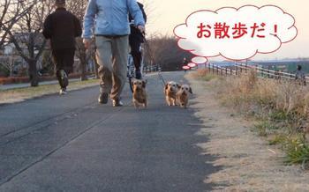 お散歩1.jpg