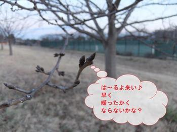 お散歩11.jpg