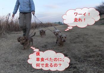 お散歩5.jpg