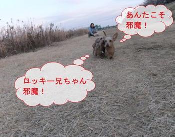 お散歩8.jpg